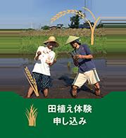 無農薬の安心・安全な田んぼ!